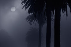 Foggy park at night Royalty Free Stock Images