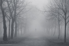 Foggy park Stock Image