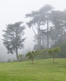Foggy Park in San Francisco Royalty Free Stock Photography