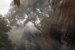 Foggy park with sunbeams Royalty Free Stock Photo