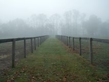Foggy Pasture royalty free stock images