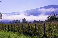 Free Foggy Pasture Royalty Free Stock Images - 45069349