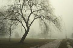 Foggy path Stock Photos