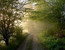 Foggy path Royalty Free Stock Photo