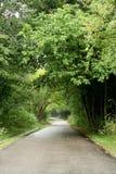 Foggy path Stock Image