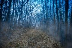 Foggy path in a dark night wood. Dark foggy path in a dark night wood Stock Photo