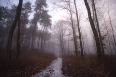 Foggy path in the forest. stock photo
