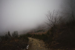Foggy path on the mediterranean mountarin forest. Mysterious road. Wild nature. Fog Royalty Free Stock Photos