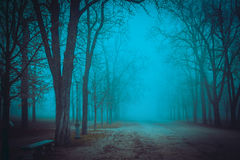 Foggy path in the park. In night Royalty Free Stock Images