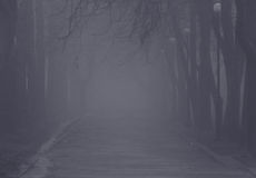 Foggy path. Path in park at foggy weather Royalty Free Stock Photo