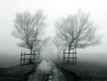Foggy path surrounding by trees Stock Photography