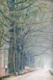 Foggy Path. It was a warm day in winter 10+, the light was so beautiful mixed, liquid light,some soft sunlight, fog and also some rain, inspirational ! Love this Stock Photos