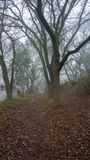 Foggy path in the woods in winter. A foggy path in the woods of the UC Davis Riparian Preserve, in the winter, displaying leafless trees and a foggy way ahead Royalty Free Stock Photos