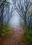 Foggy pathway. Forest pathway with foggy conditions Stock Images