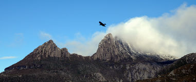 Foggy peak of Mt.Cradle in Tasmania Australia. With a black eagle flying above sky Stock Photography