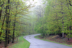 Foggy Pennsylvania road. Road traveling through green forest on foggy day royalty free stock image
