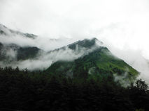 Foggy Pine Forest on Green Himalayas Royalty Free Stock Images