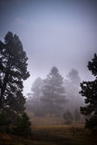 Foggy pine tree landscape Royalty Free Stock Photography