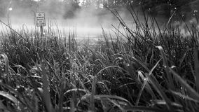 Foggy pond. Early in the morning Stock Images