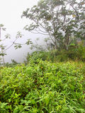Foggy Puerto Rico Rainforest Royalty Free Stock Photography