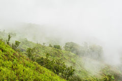 Foggy rain forest on a mountain slope in a national park on morning Royalty Free Stock Photography