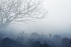 Foggy rainy fall day. Moody grey fall background - trees in fog, rainy day, foggy day, raindrops flowing on window, depression from fall weather stock images