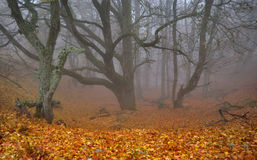 Foggy ravine in autumn forest. In Crimean mountains royalty free stock photos