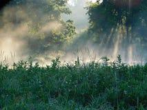 Foggy Rays Stock Photography