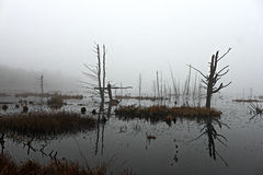 Foggy reflection at the swamp Stock Photos