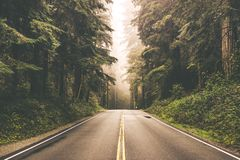 Foggy Redwood Highway. Foggy Straight Redwood Highway in Northern California, United States stock images