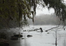 Foggy River Santa Fe River. View of the spring-fed Santa Fe River in Florida on a foggy morning. The beginning of spring color and Spanish moss can be seen on Stock Images