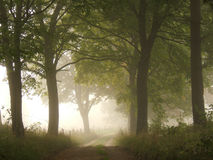 Foggy road Stock Photography