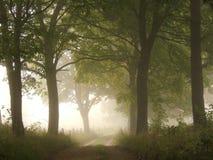 Foggy Road Stock Photography