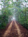 Foggy Road. Foggy country road at morning time royalty free stock photo