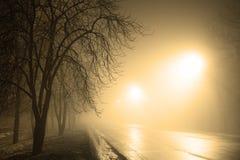 Foggy road. At night and trees Royalty Free Stock Photo