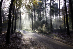 Foggy road. In the autumn forrest Stock Images