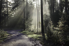 Foggy road. In the autumn forrest Royalty Free Stock Photography