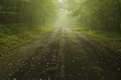 Dreamy forest in Delaware Water Gap royalty free stock image