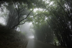 Foggy road flanked by trees Royalty Free Stock Photos