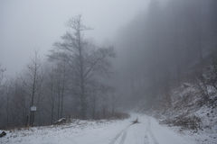 Foggy road in the forest Royalty Free Stock Image