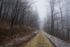 Foggy road in the forest Royalty Free Stock Images