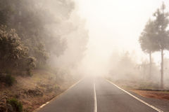 Foggy road in forest, street in misty forest Stock Photos