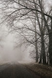 Foggy road and forest trees. Early morning landscape, frost on the ground. noise film effect. vertical Royalty Free Stock Photography