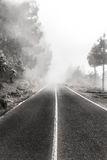 Foggy road in forest , trees and highway in fog. Foggy road in forest - trees and highway in fog stock image