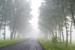 Foggy road. Morning walking in the alley Stock Photo