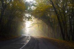 Foggy road Royalty Free Stock Photo