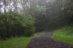 Foggy road, UK, England royalty free stock image