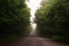 Foggy road. Walking in the early morning Stock Photo