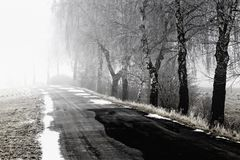 Foggy road in winter. Tree lined country road receding into distance through fog, winter scene Stock Image