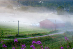 Foggy rural landscape Stock Images